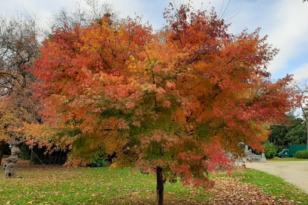 Herbst – die beste Zeit für einen walk&talk